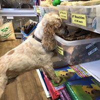 The pet shop ripon, pet shops ripon