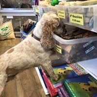 Dexter And Archie S Blog Archives Pet Shops Ripon The Pet Shop Ripon North Yorkshire