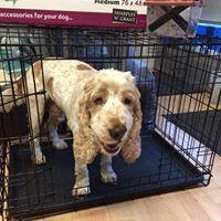 The Pet Shop Ripon, North Yorkshire