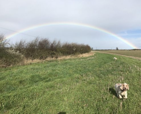Archie, The Pet Shop Ripon and a rainbow