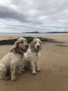 Archie and Dexter, The Pet Shop Ripon on the beach at Embleton Northumberland