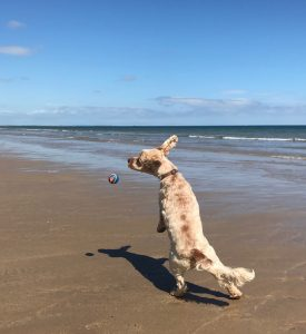 Archie playing ball on the beach