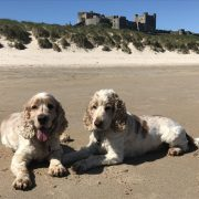 Archie and Dexter Bamburgh Beach Northumberland