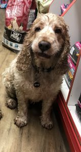 Wet Dexter, The Pet Shop Ripon