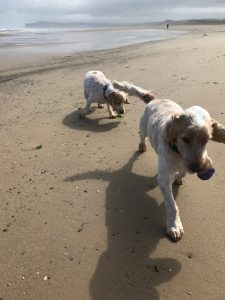 Archie and Dexter playing on the beach