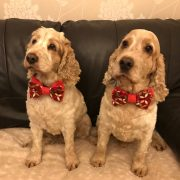 Archie and Dexter were given some lovely bow ties, which they are modelling here