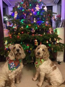 Archie and Dexter are ready for Christmas The Pet Shop Ripon