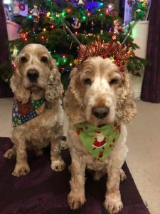 Archie and Dexter sitting waiting for a treat by the Christmas tree