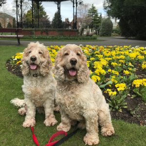 Dexter and Archie I. Ripon Spa Gardens