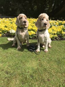 Archie and Dexter sitting by the flowers in the park