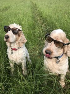 Archie and Dexter The Pet Shop Ripon