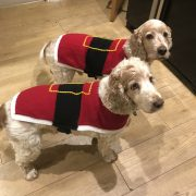Archie and Dexter wearing their new Santa jumpers