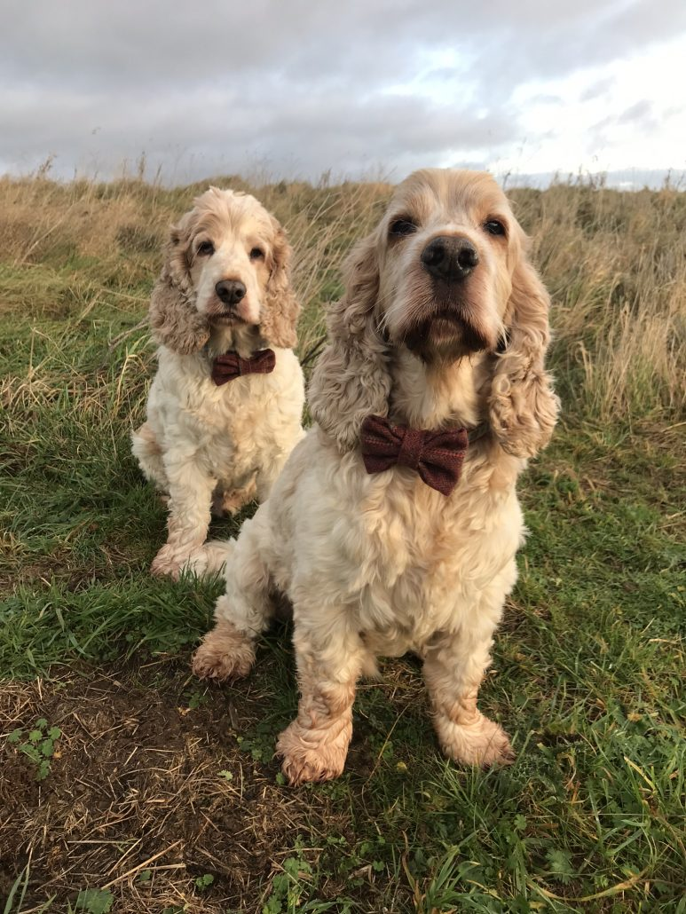 Archie and Dexter The Pet Shop Ripon, modelling their new red bow ties