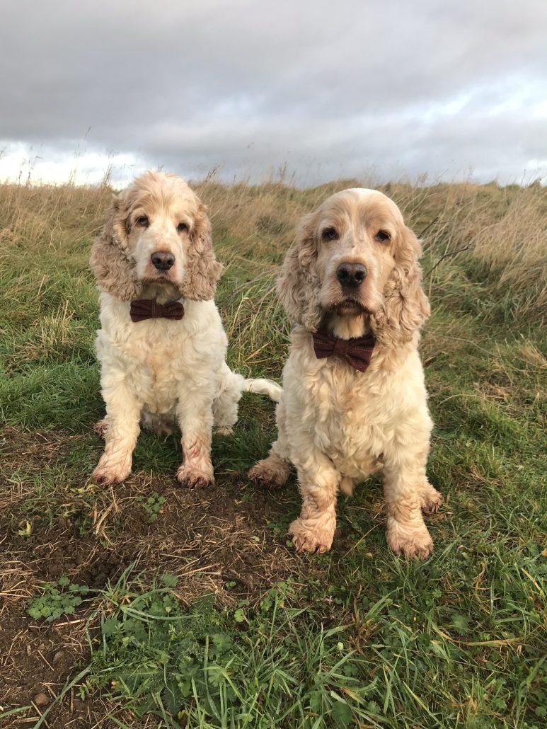 Cloudy walks Archie and Dexter The Pet Shop Ripon