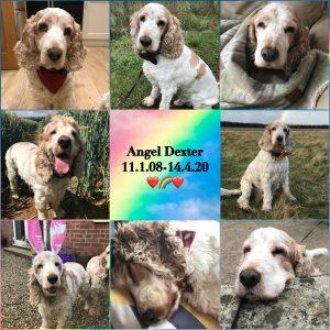 Dexter 11 1 2008 14 4 2020 Pet Shops Ripon The Pet Shop Ripon North Yorkshire